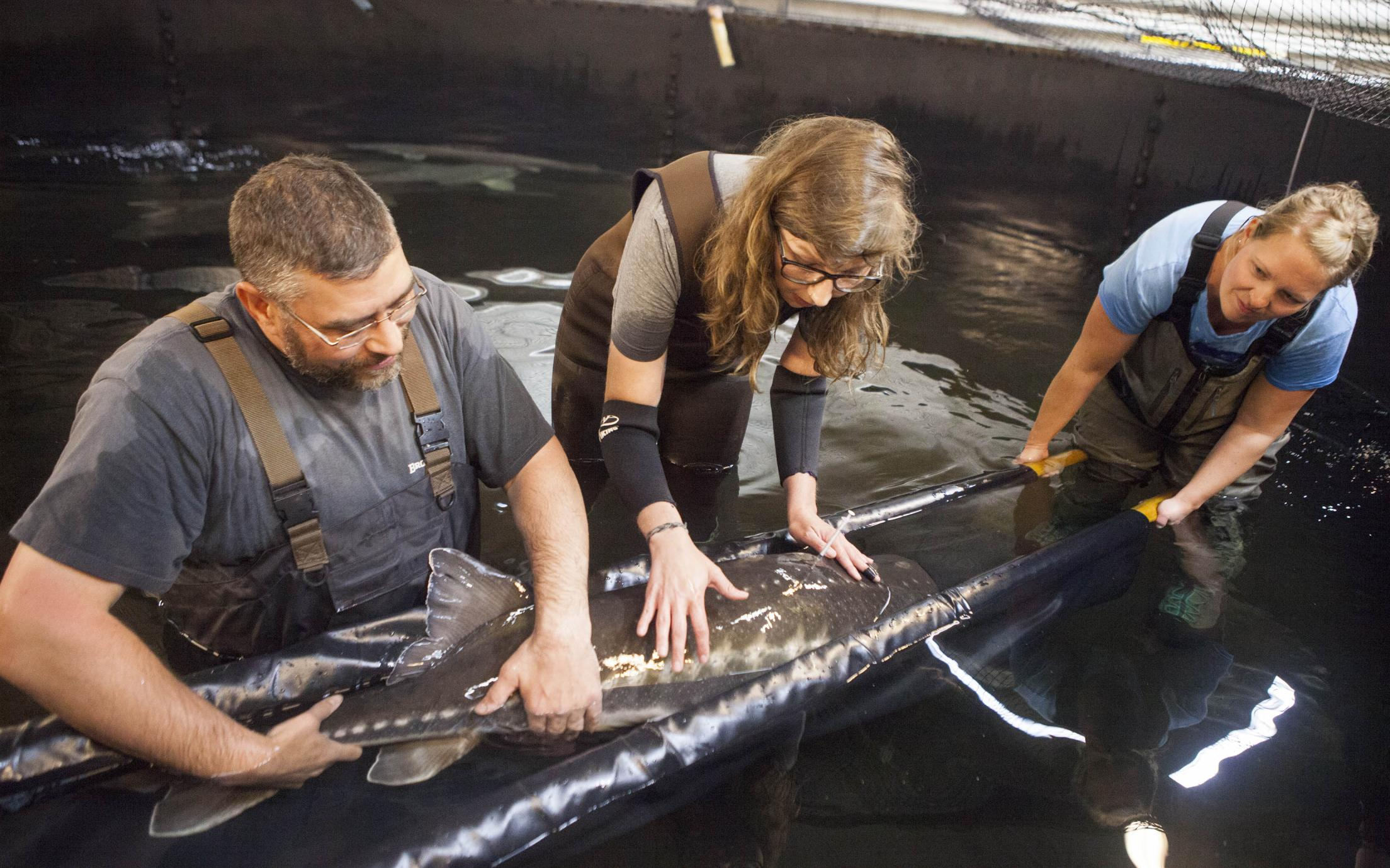 Bachelor of Science in Fisheries and Aquaculture Students rescuing a fish
